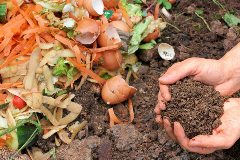 compost-768x512